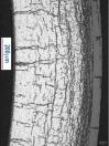 Cross Section Fuel Rod Significant Radial Hydride Orientation DE-NE-0000593